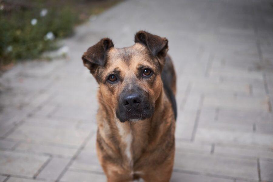 cane confuso guarda