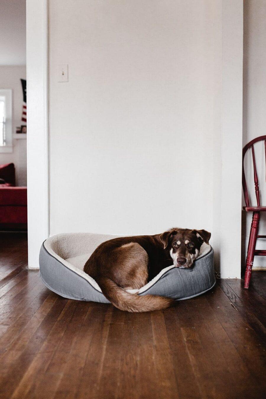 cane nella cuccia