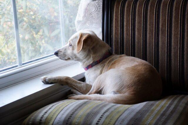 cucciolo cane visuale