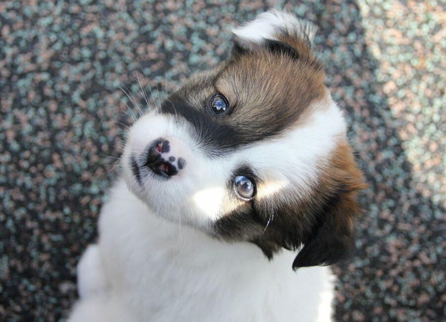 cucciolo guarda te
