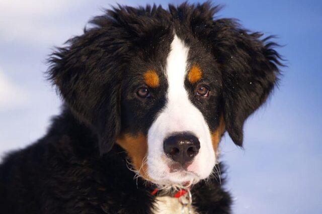 cucciolo cane dolce
