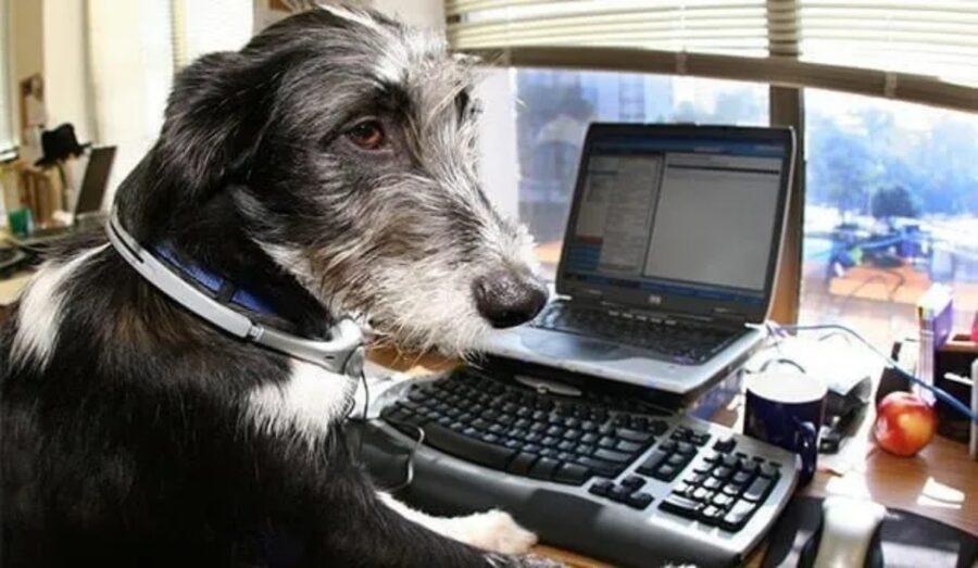 felino tastiera lavorare