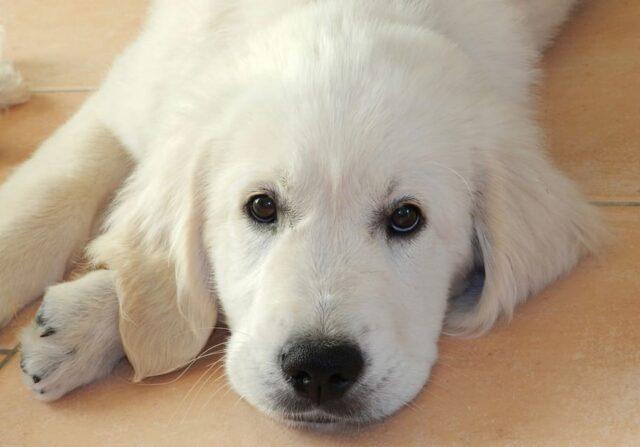 cane dolcissimo muso