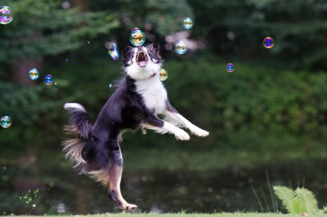 cane salta gioco