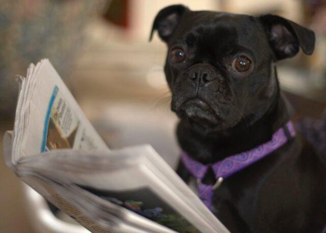 cucciolo adorabile giornale