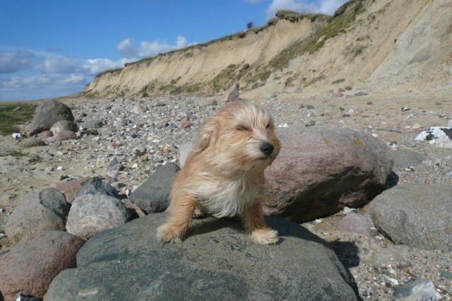 cane dolcissimo spiaggia