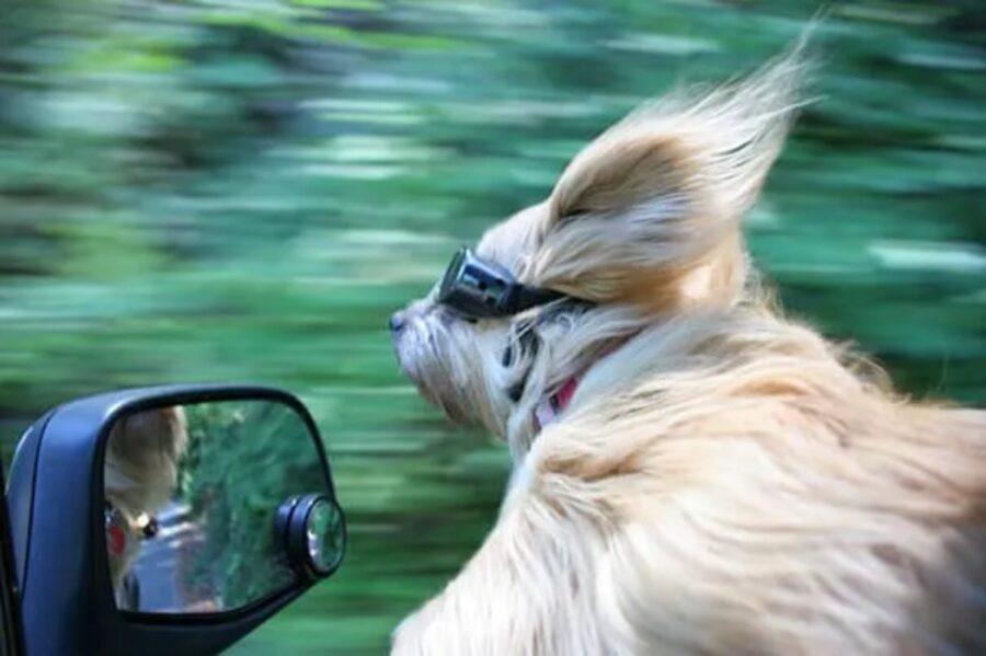 cane occhiali viaggio