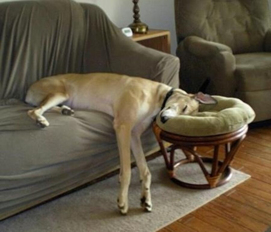 cane stanco dormire