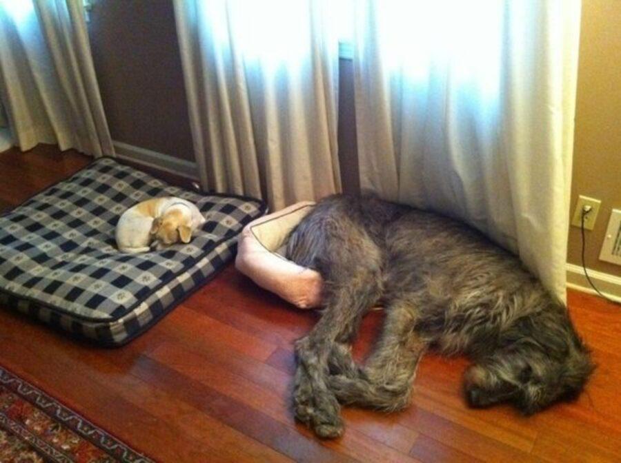 cane cuccia occupa