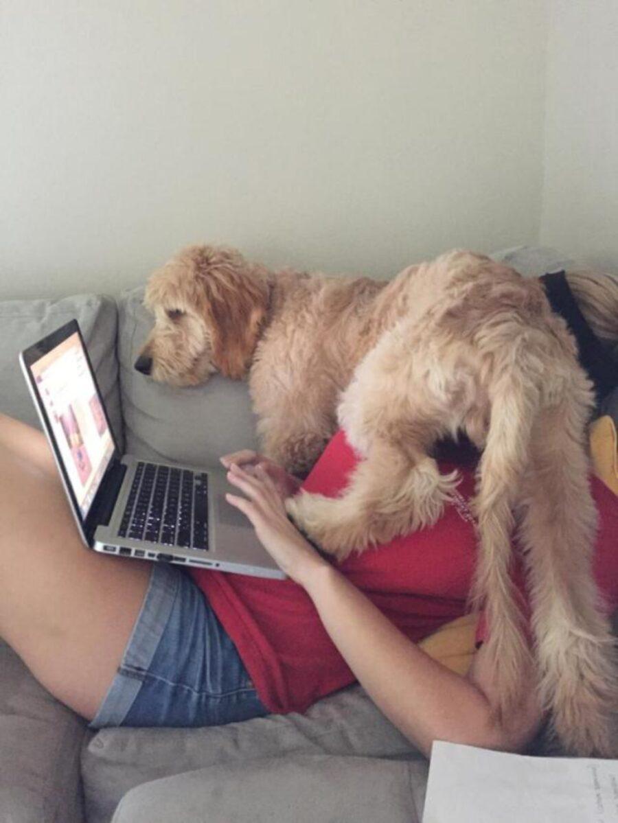 cucciolo computer papà