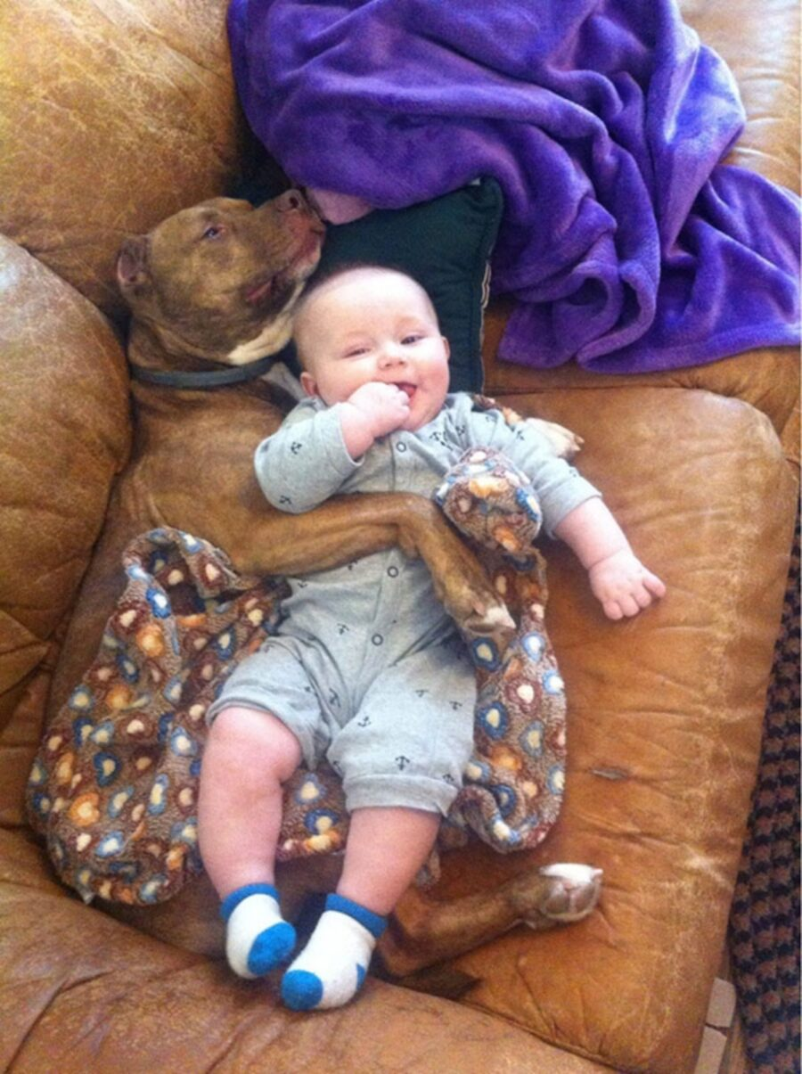 babysitter bimbo cane