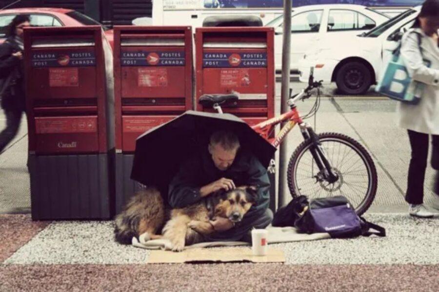 cane sotto ombrello