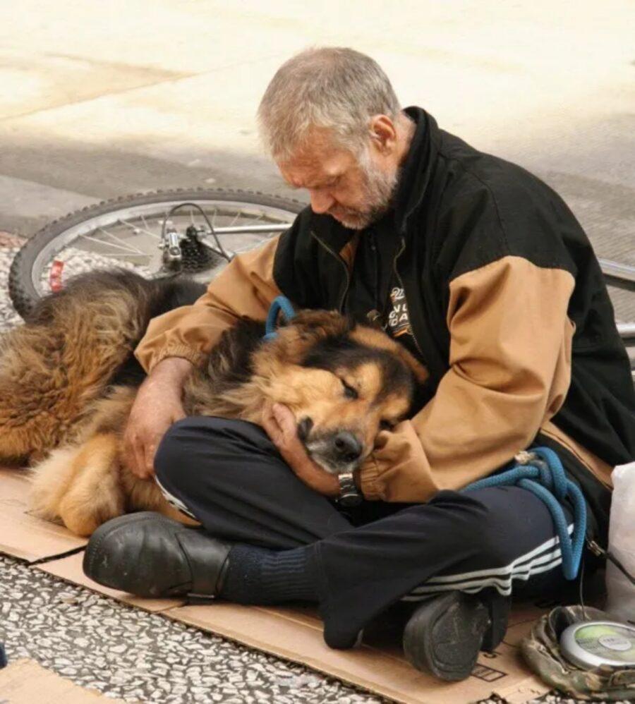 affetto cane padrone