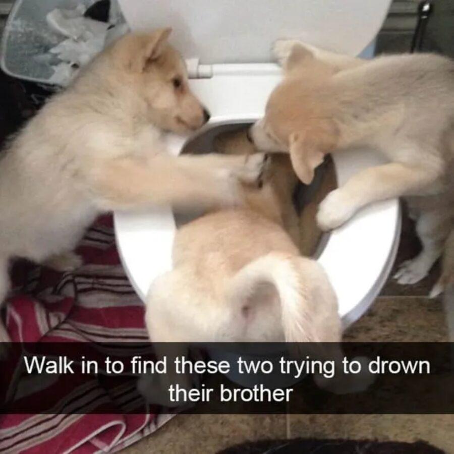 cani giocano dispetti