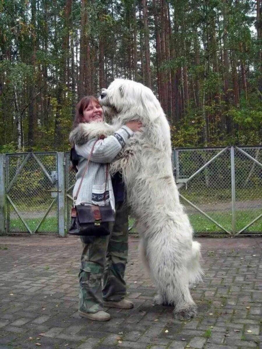 cane gigante abbraccio