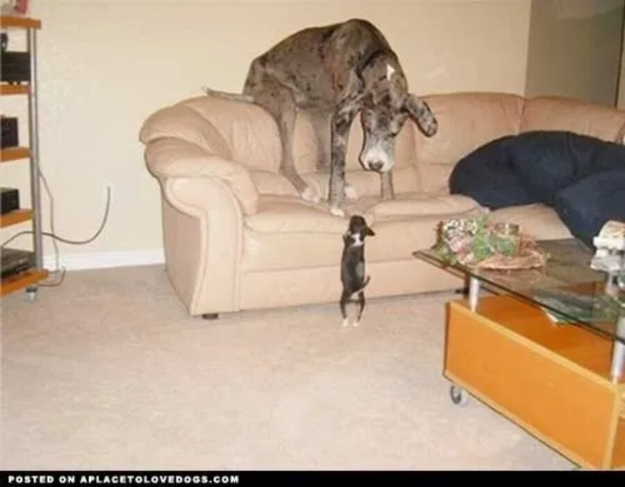 cani dimensioni diverse