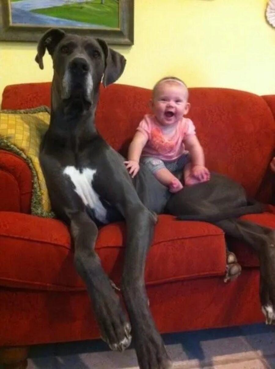 cane alano gigante