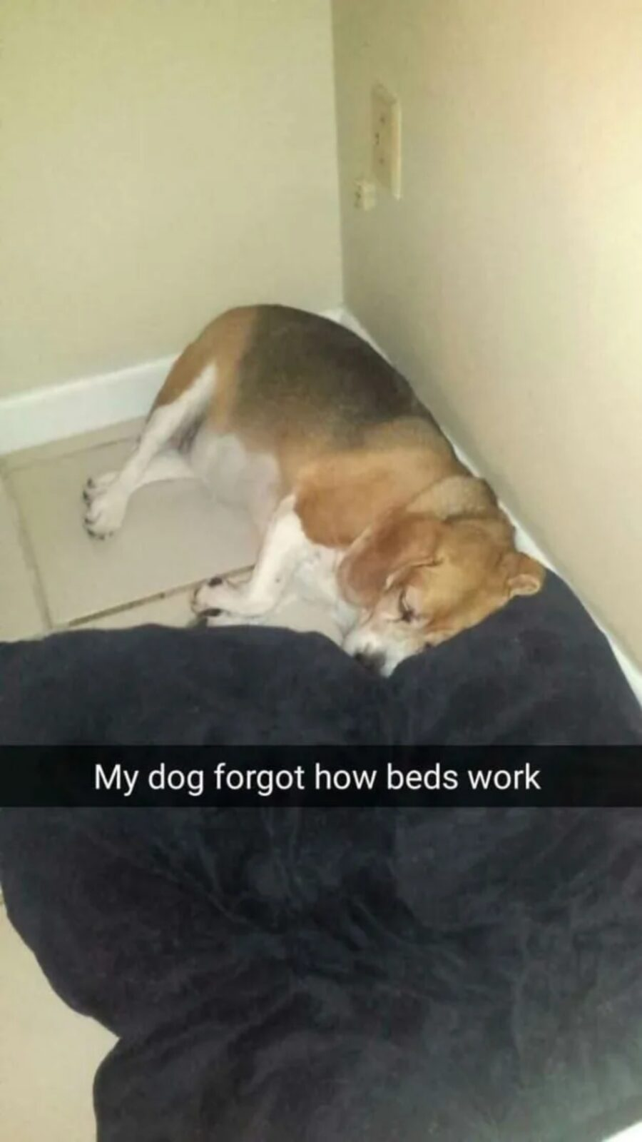 cane fuori cuccia