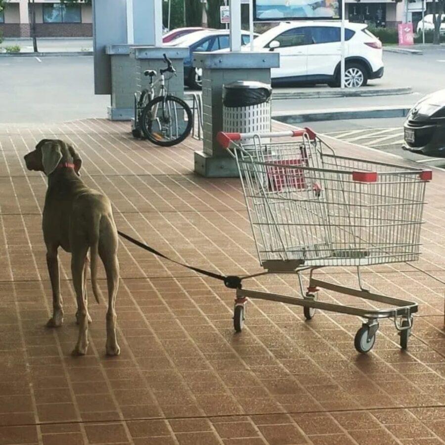 cucciolo con carrello