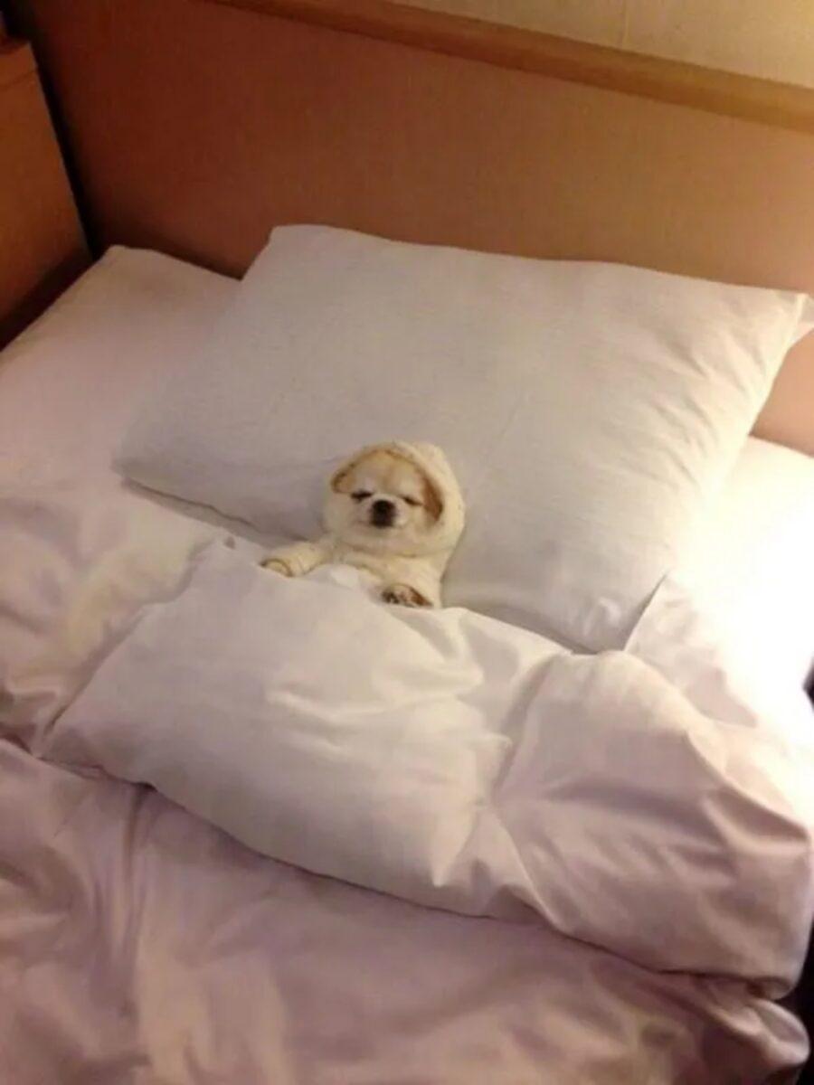 cucciolo stanco riposo