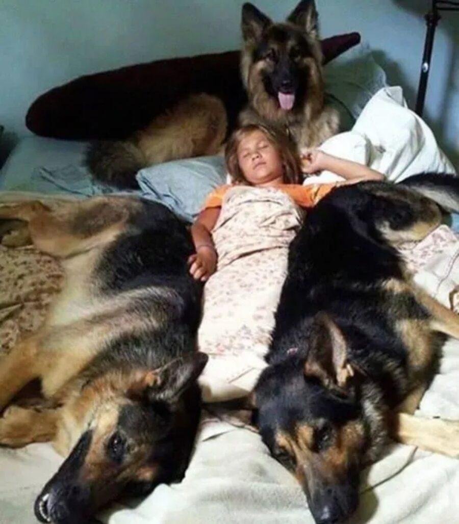 bimbo con cani