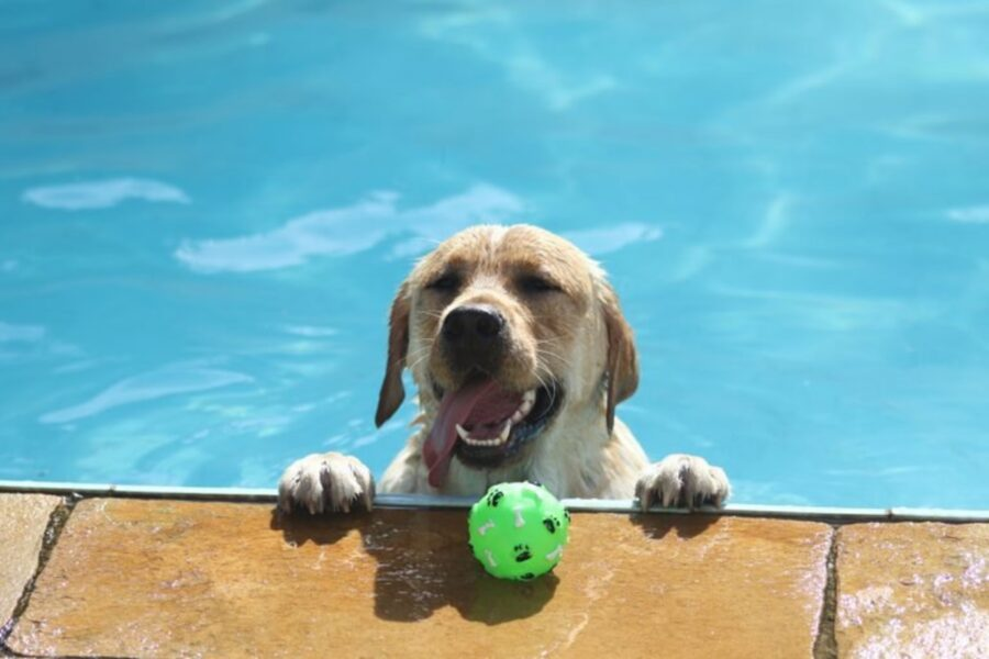 cane piscina bagno