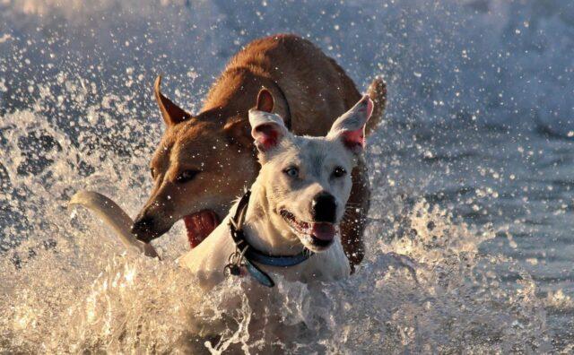 cani giocare acqua