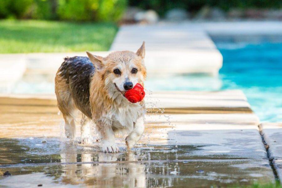 cucciolo bordo piscina