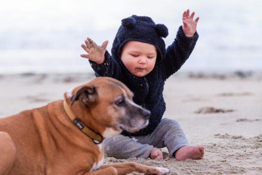 cane spiaggia bambino