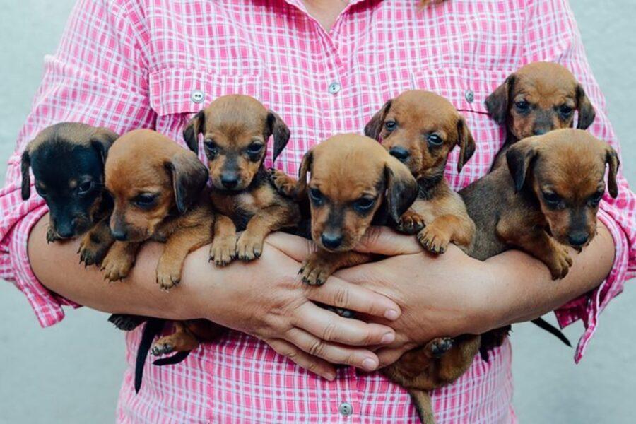 cani in braccio