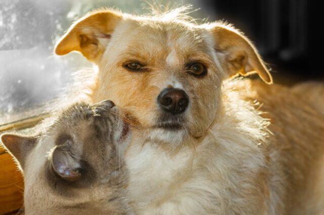foto che vogliono far luce su relazione cani gatti