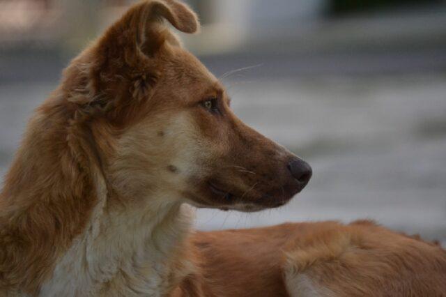 cani che con volontà hanno superato difficoltà