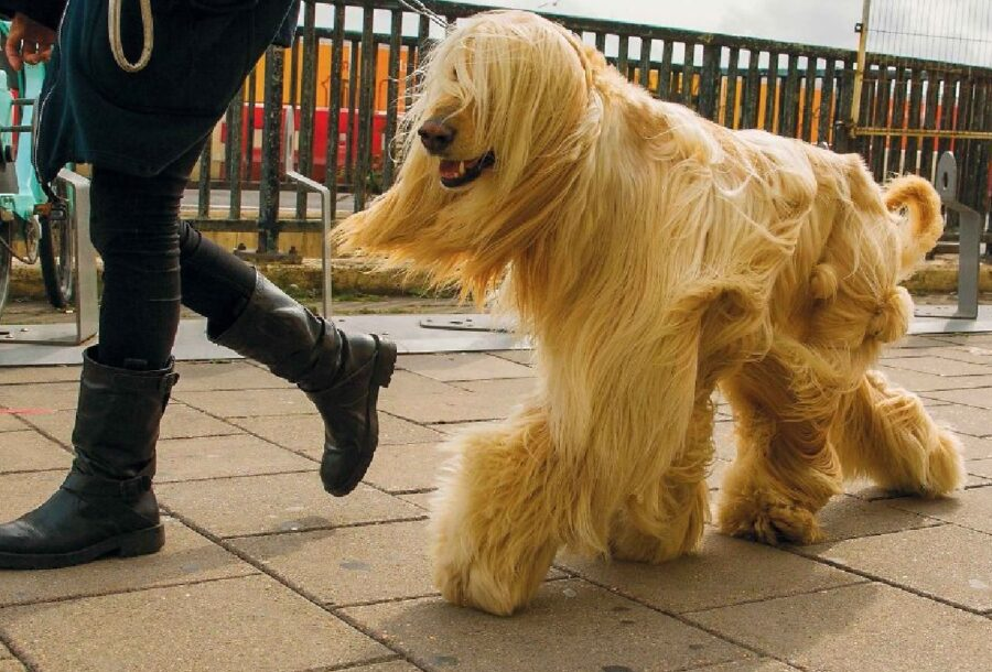 cane con pelo molto lungo
