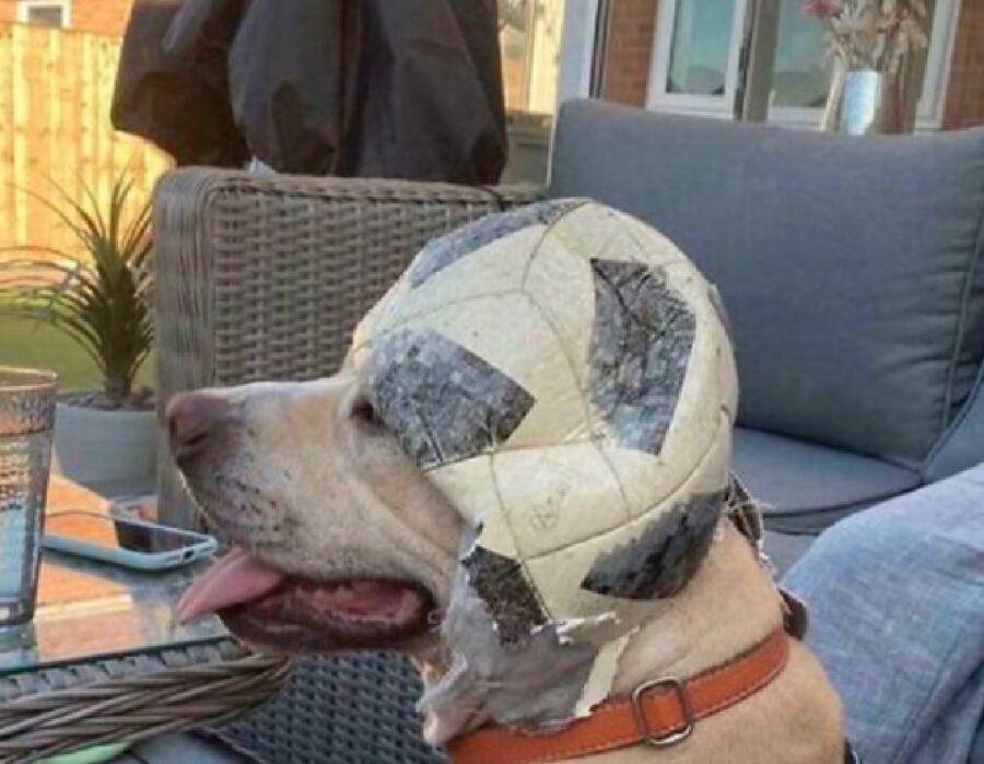 cane con la palla da calcio in testa