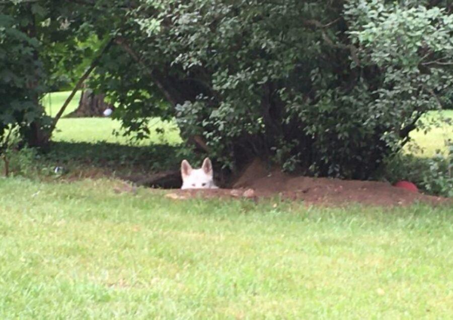 cagnolino bianco aspetta il suo momento