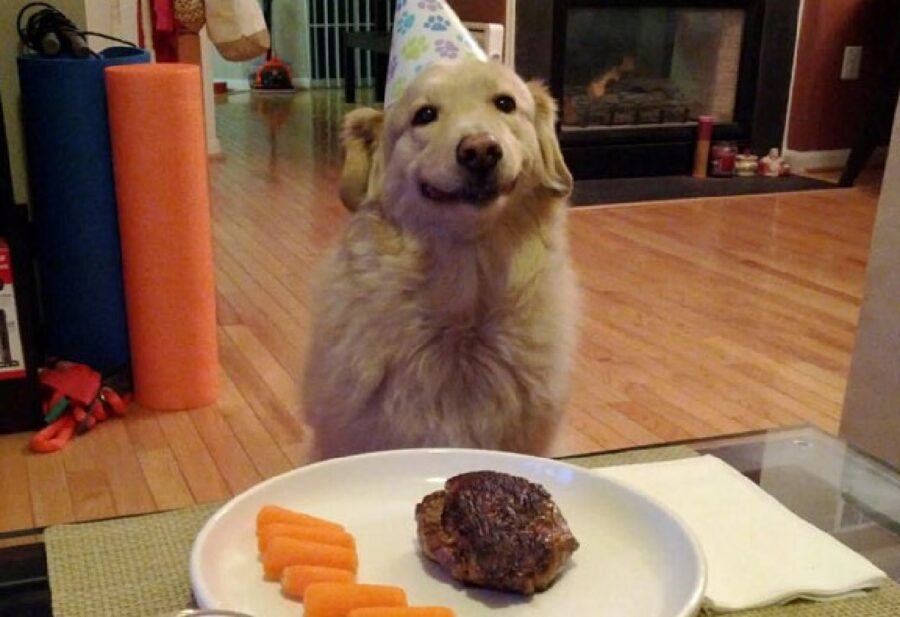 cane festa di compleanno