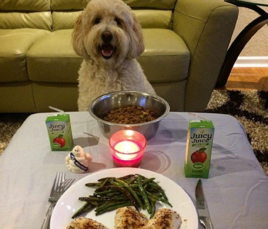 cane ciotola di cibo