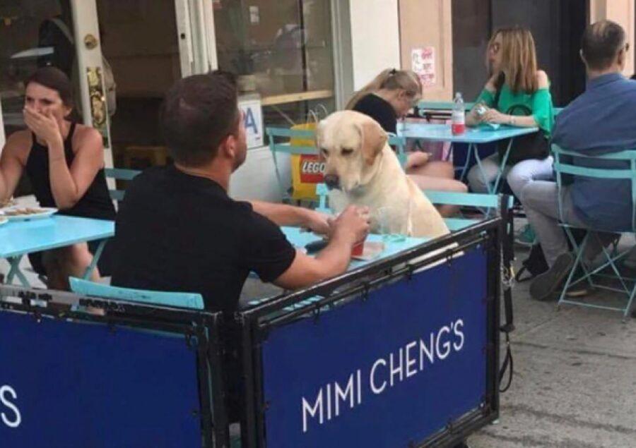 cane invitato ad un locale