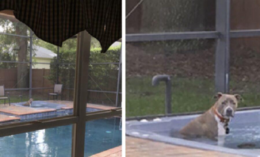 cane pitbull si gode idromassaggio
