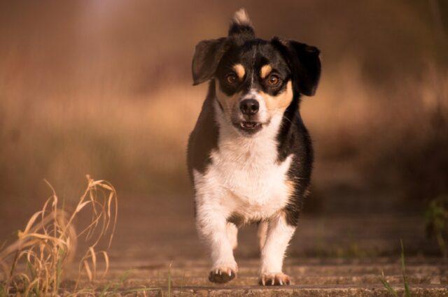 cani che per comportamento vengono da un altro mondo