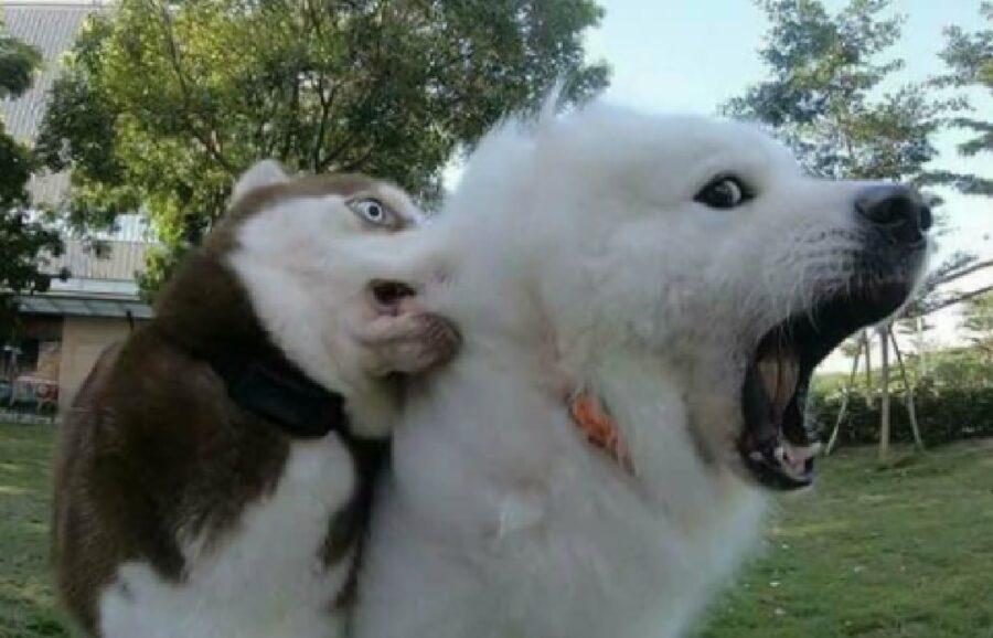 cane morde orecchio altro cucciolo