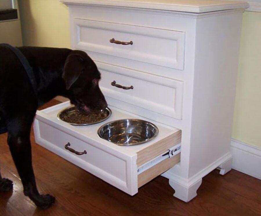 cane mangia due ciotole