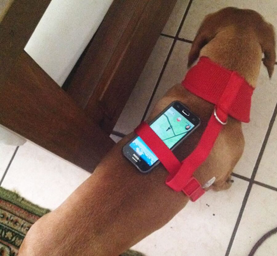 cane svolge funzione navigatore