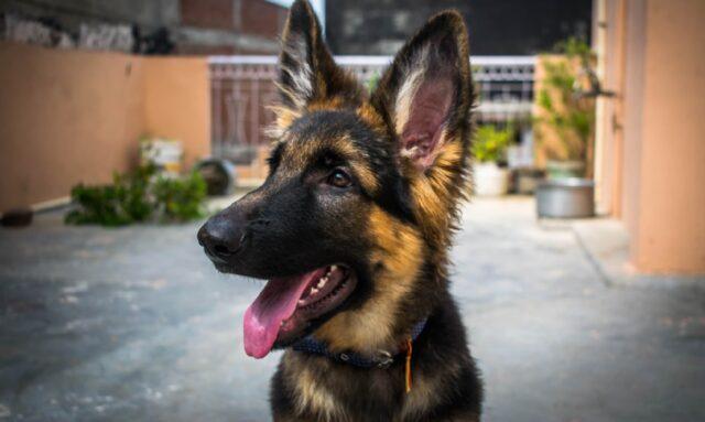 cani che sono rimasti intrappolati