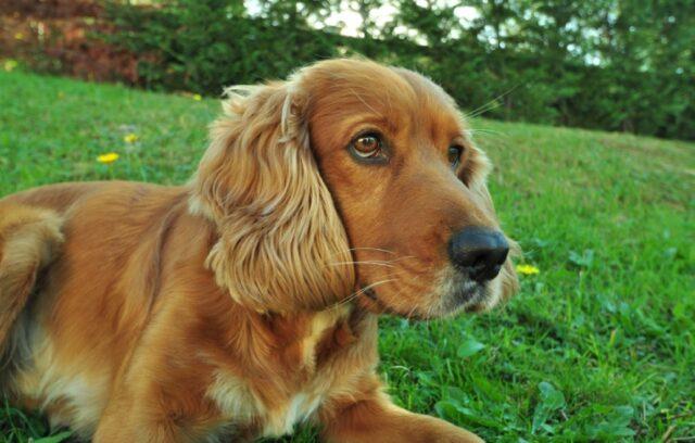 cani che possono permettersi un pisolino ovunque