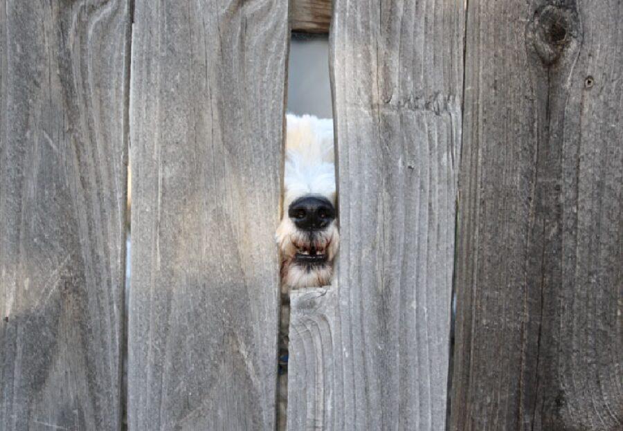 cane tra due lastre di legno
