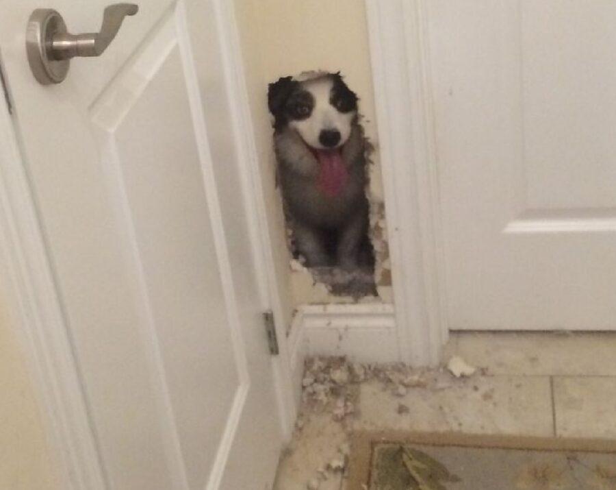 cane muro spaccato si affaccia