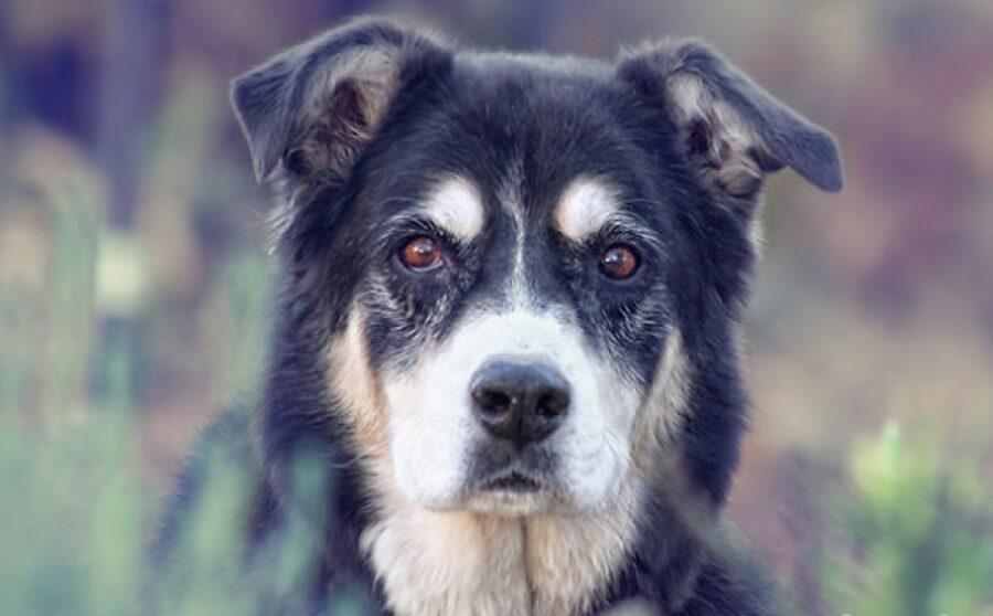 cane anziano nel bosco