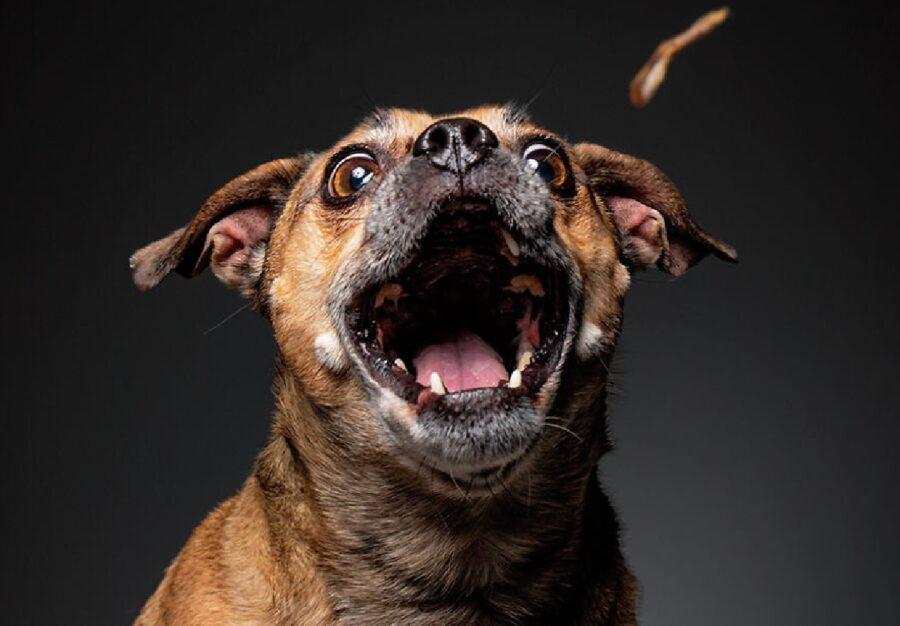 cane apre bocca per cibo