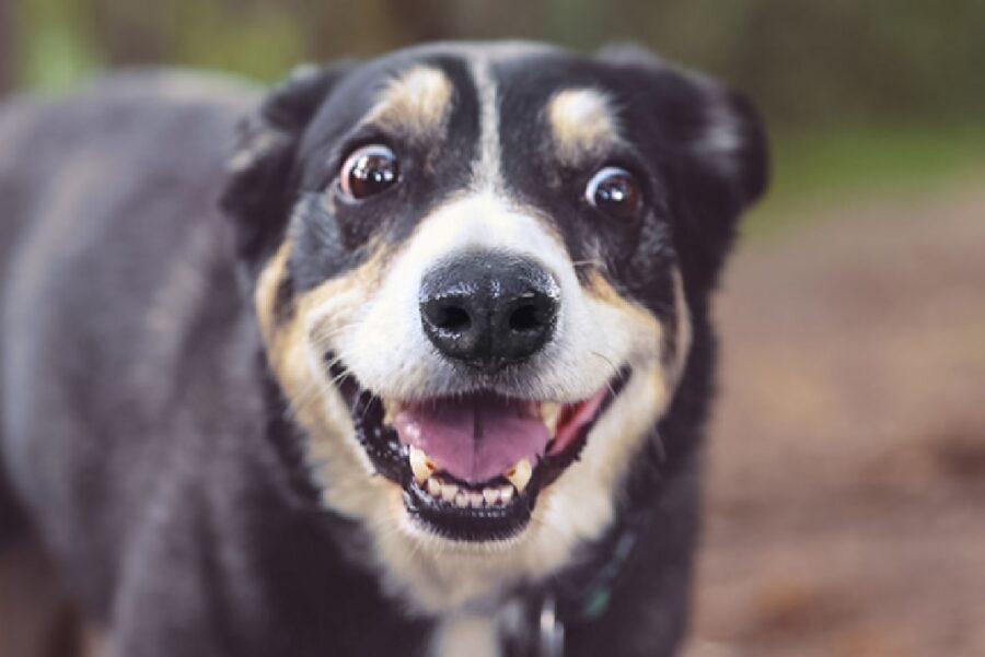 cane sorride perché contento